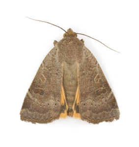 moth-photos